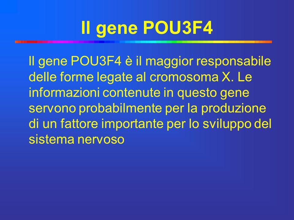 ll gene POU3F4