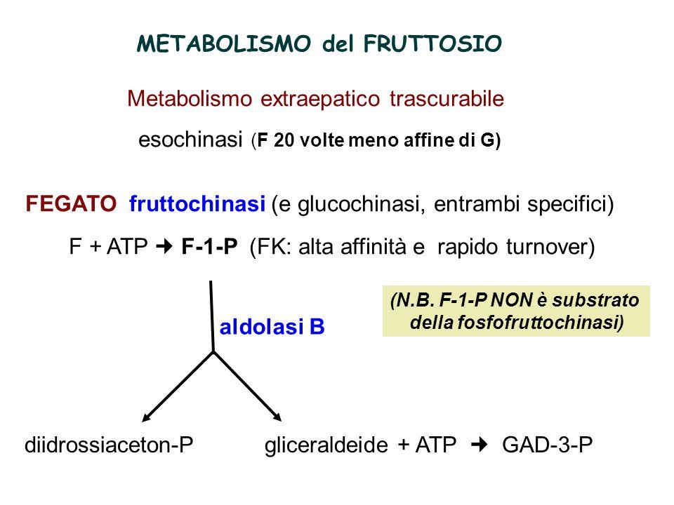 (N.B. F-1-P NON è substrato della fosfofruttochinasi)
