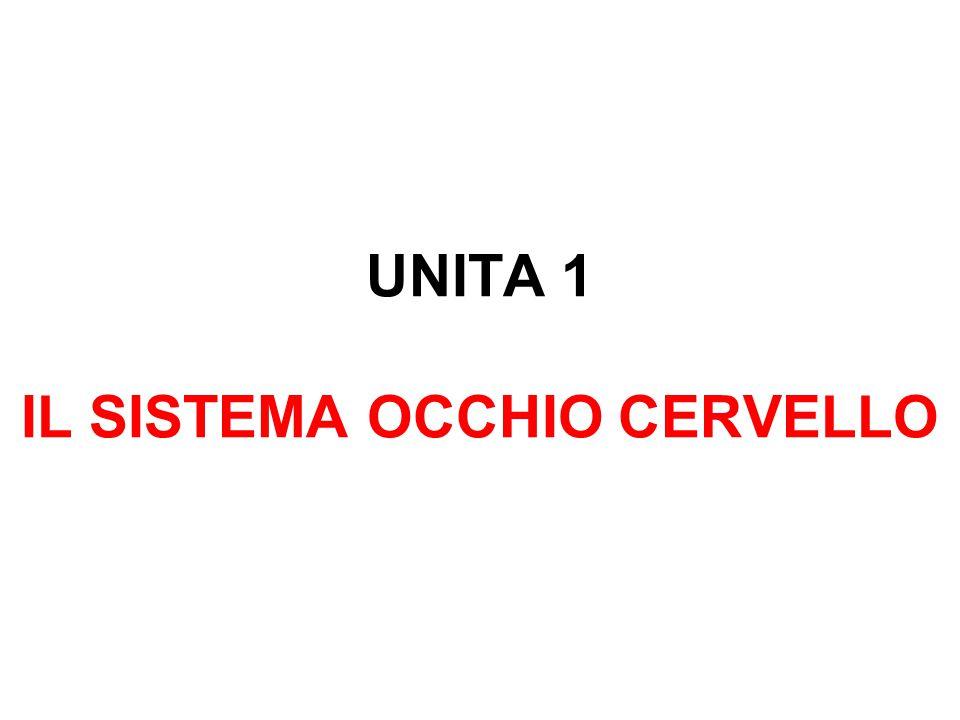 UNITA 1 IL SISTEMA OCCHIO CERVELLO