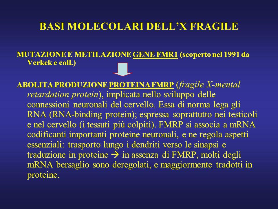 BASI MOLECOLARI DELL'X FRAGILE