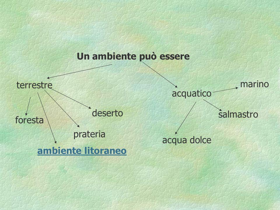 Un ambiente può essere terrestre. marino. acquatico. deserto. salmastro. foresta. prateria. acqua dolce.