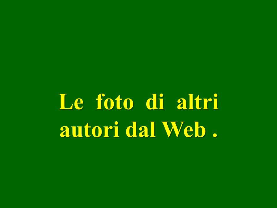 Le foto di altri autori dal Web .