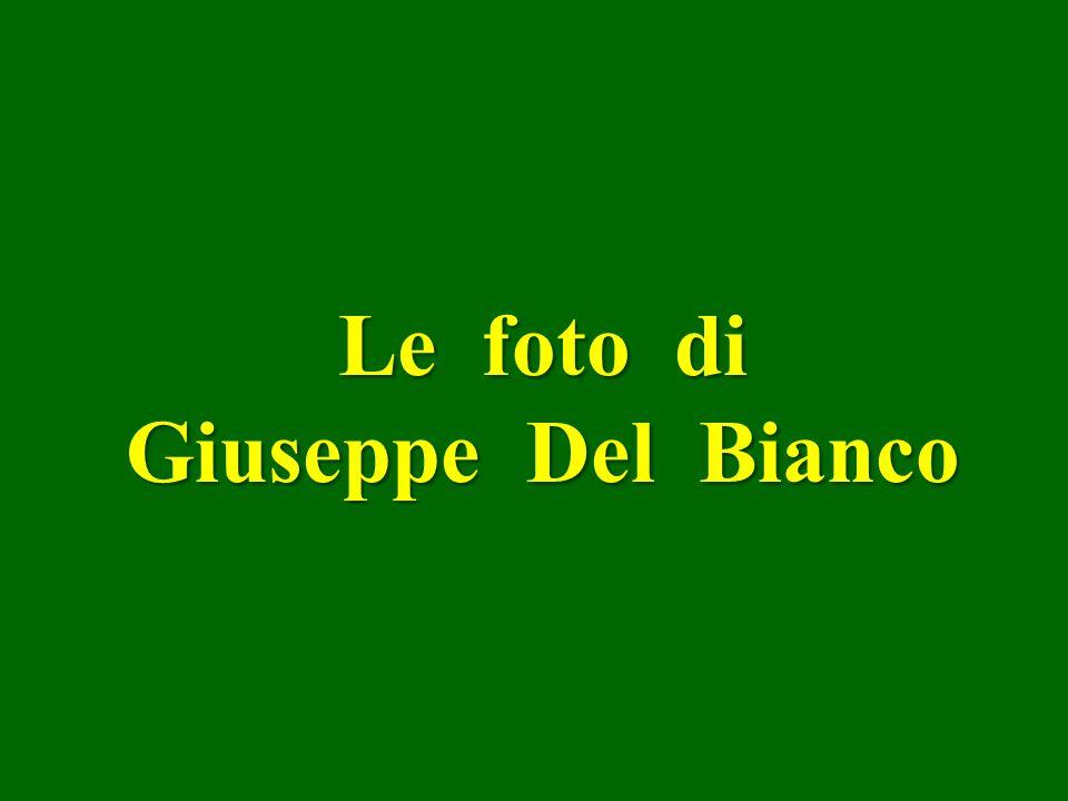 Le foto di Giuseppe Del Bianco