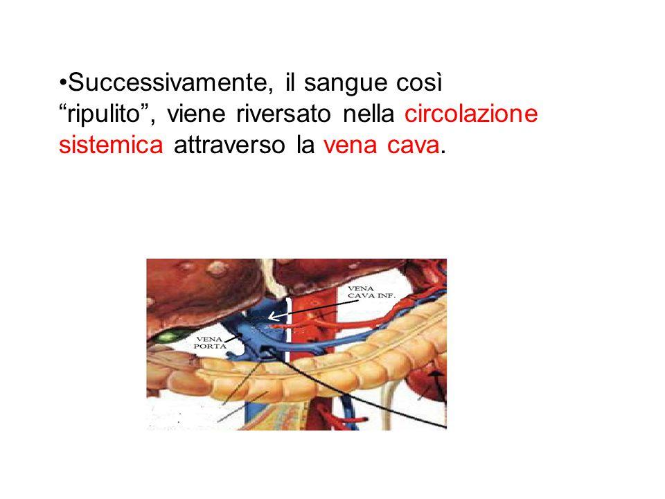 Successivamente, il sangue così ripulito , viene riversato nella circolazione sistemica attraverso la vena cava.