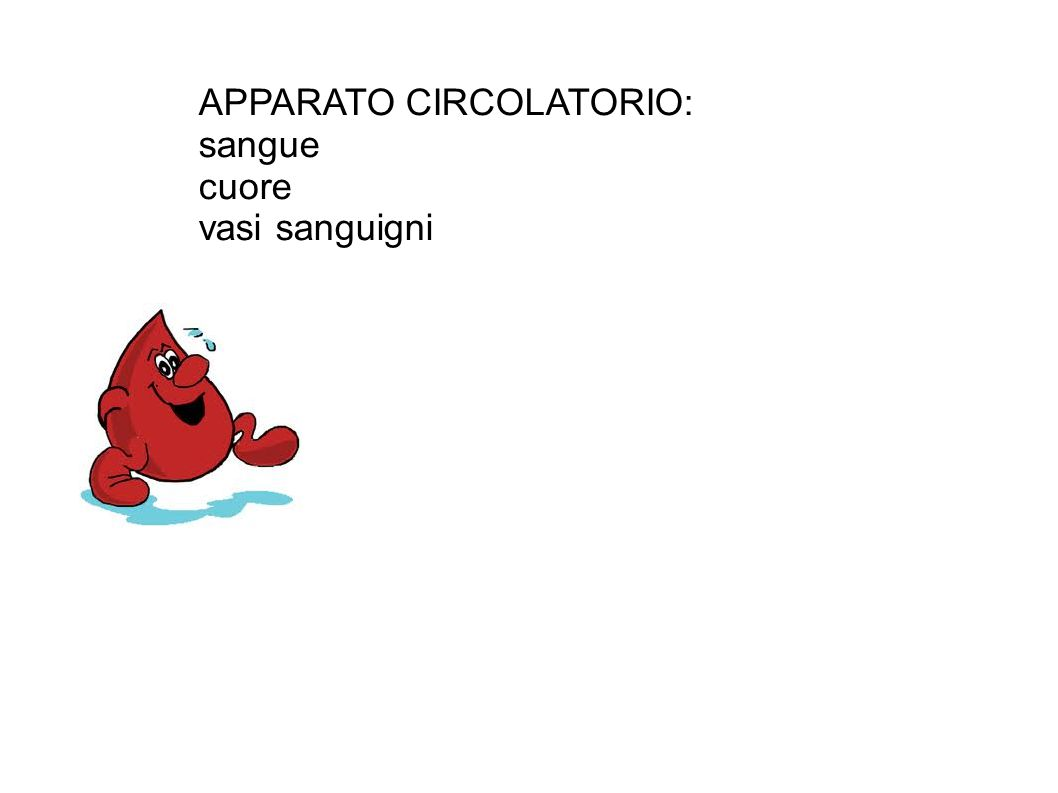 APPARATO CIRCOLATORIO: