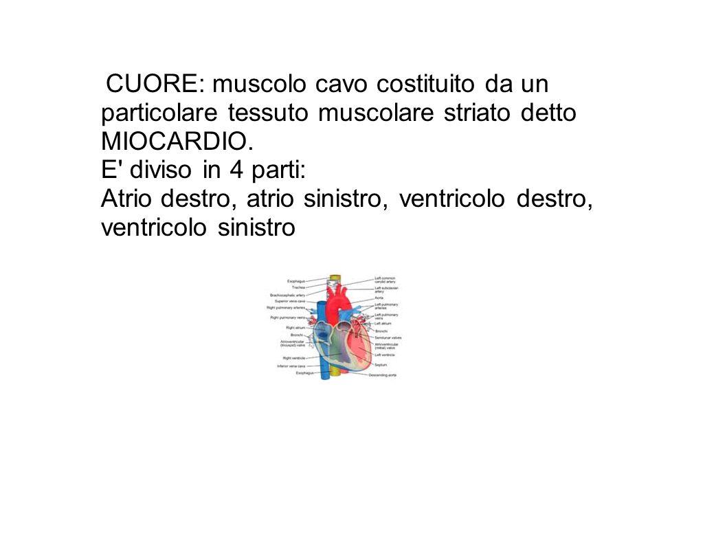 Atrio destro, atrio sinistro, ventricolo destro, ventricolo sinistro