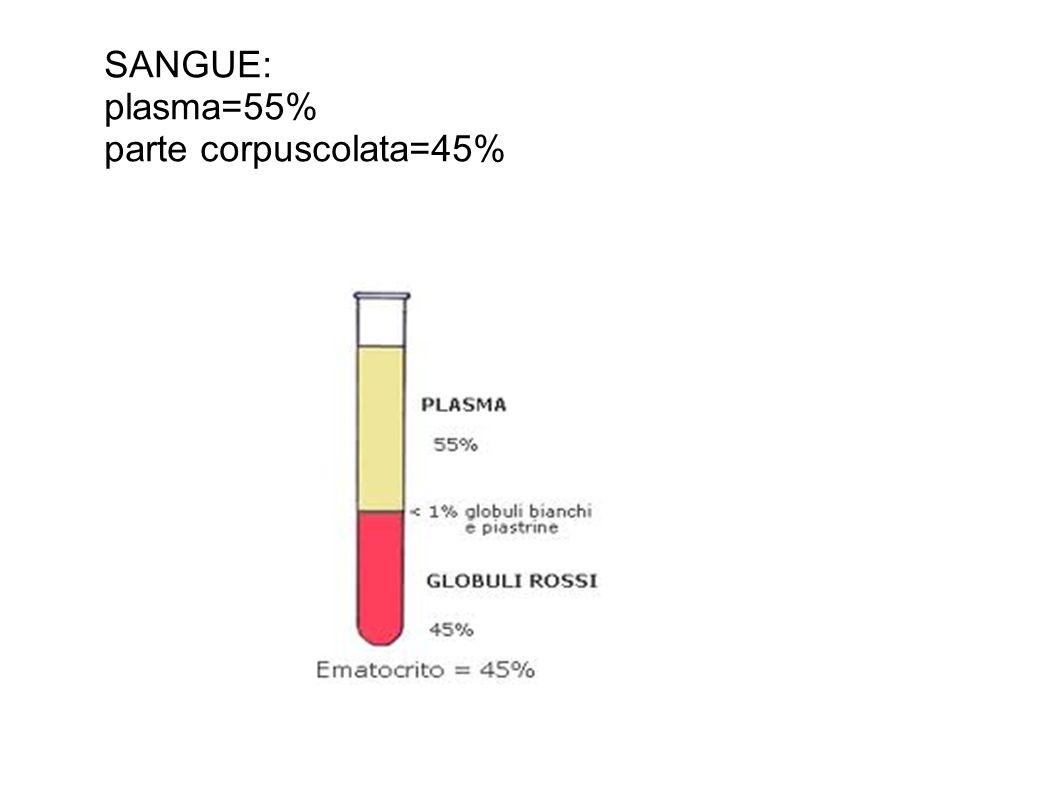 SANGUE: plasma=55% parte corpuscolata=45%