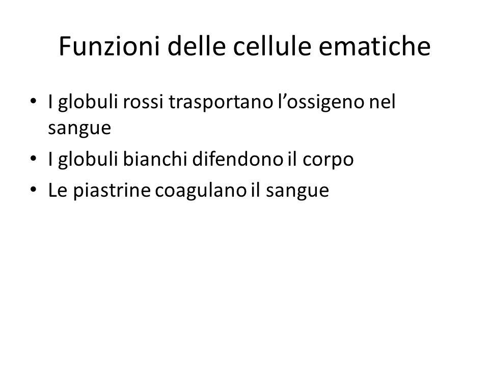 Funzioni delle cellule ematiche