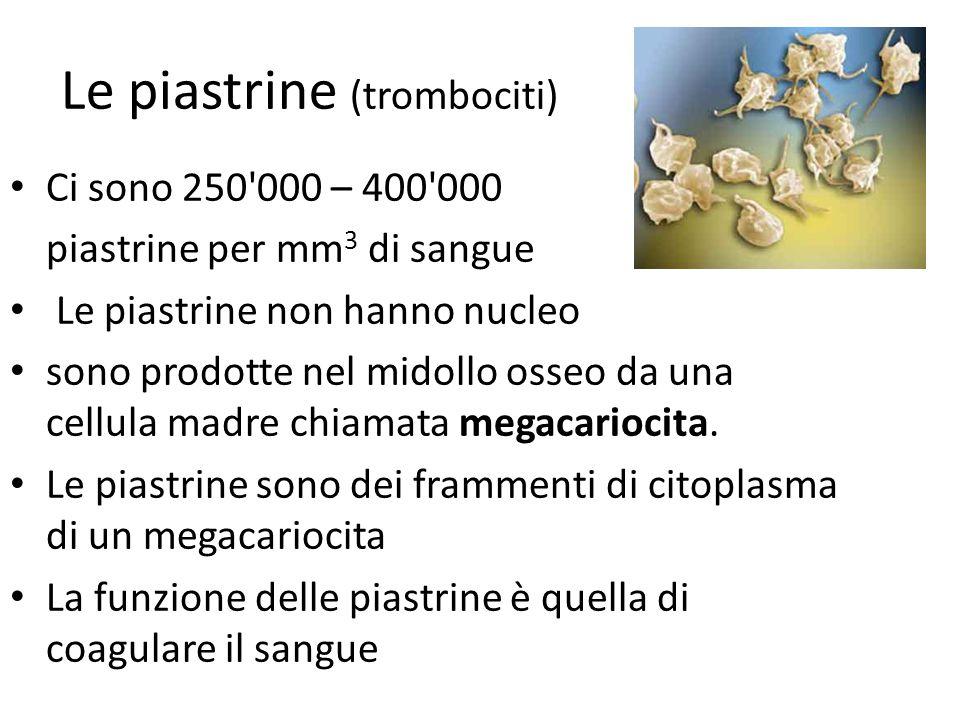 Le piastrine (trombociti)