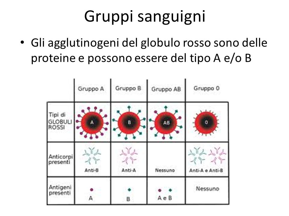 Gruppi sanguigni Gli agglutinogeni del globulo rosso sono delle proteine e possono essere del tipo A e/o B.