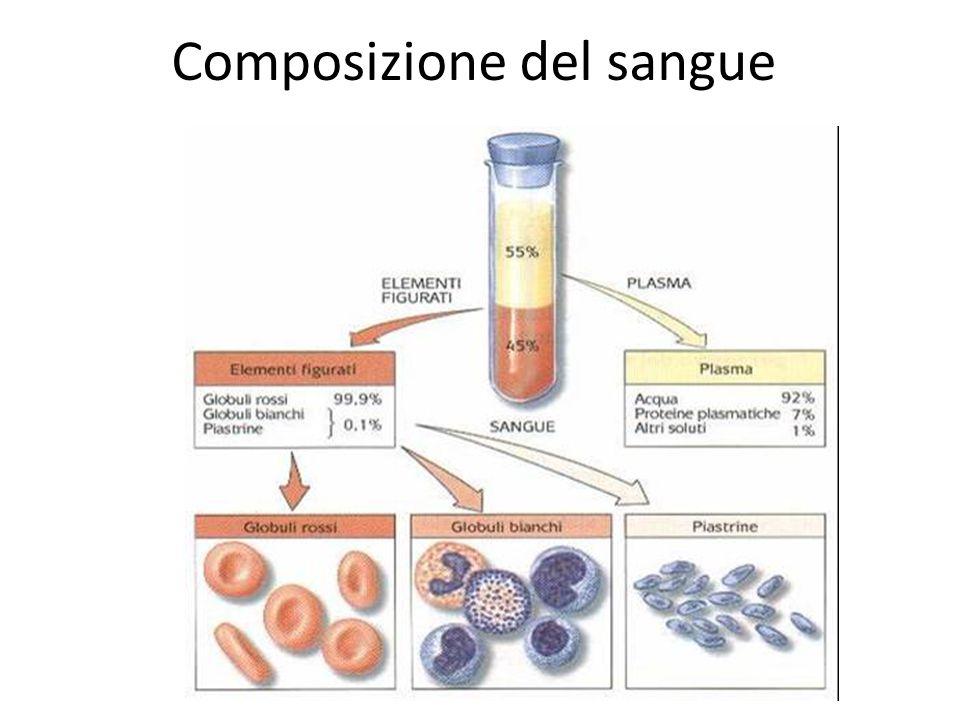Composizione del sangue