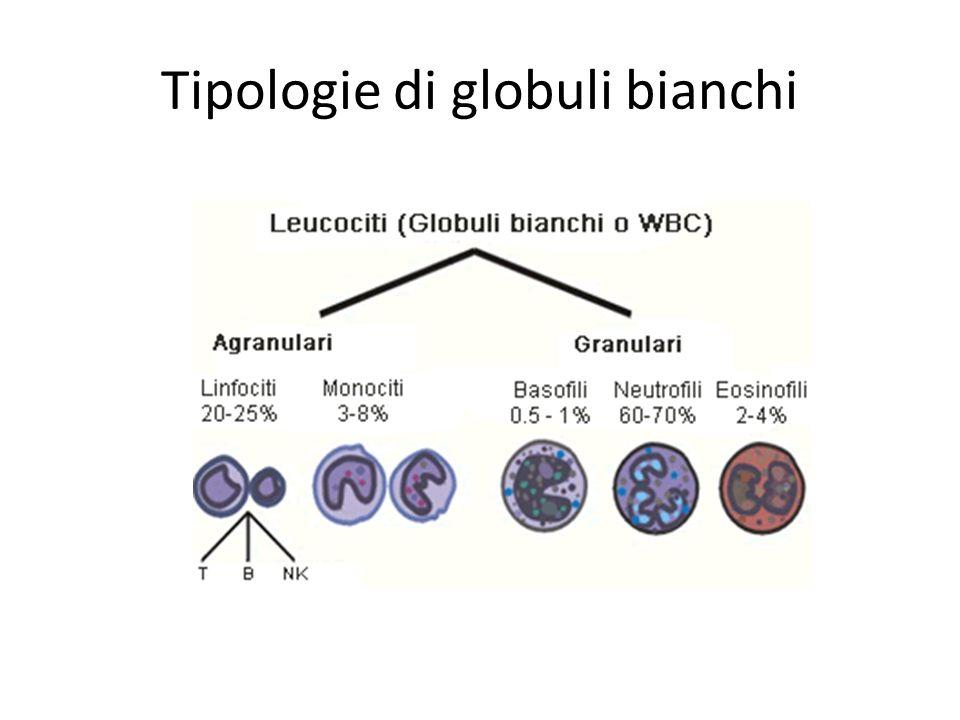 Tipologie di globuli bianchi