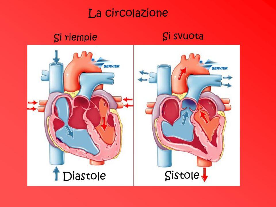 La circolazione Si riempie Si svuota Diastole Sistole