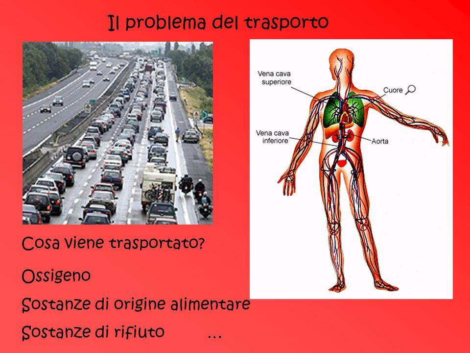 Il problema del trasporto