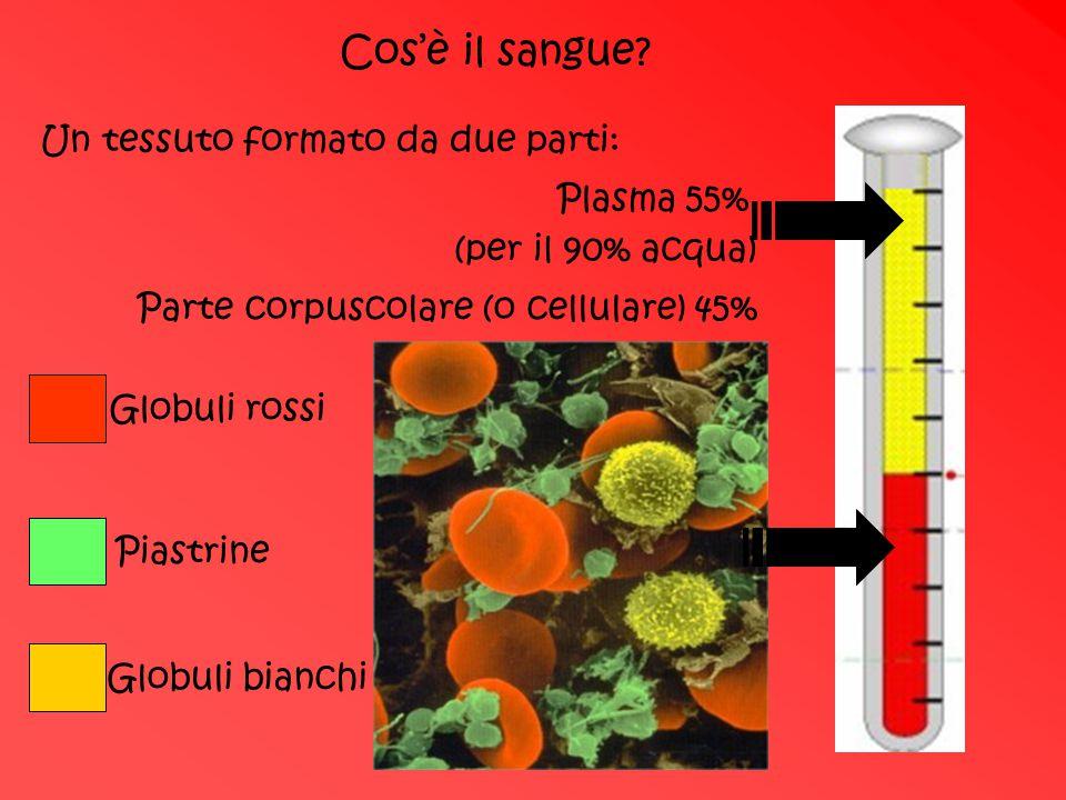 Cos'è il sangue Un tessuto formato da due parti: Plasma 55%