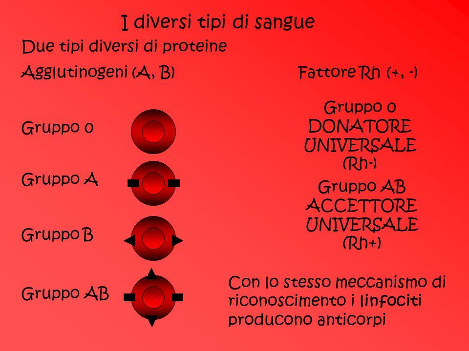 I diversi tipi di sangue