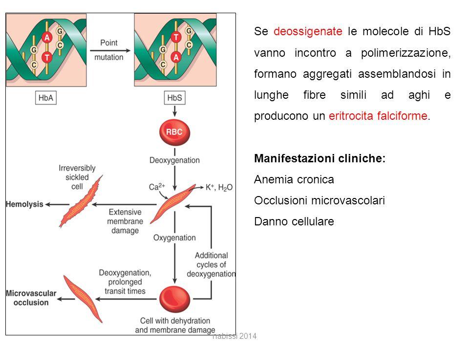 Manifestazioni cliniche: Anemia cronica Occlusioni microvascolari