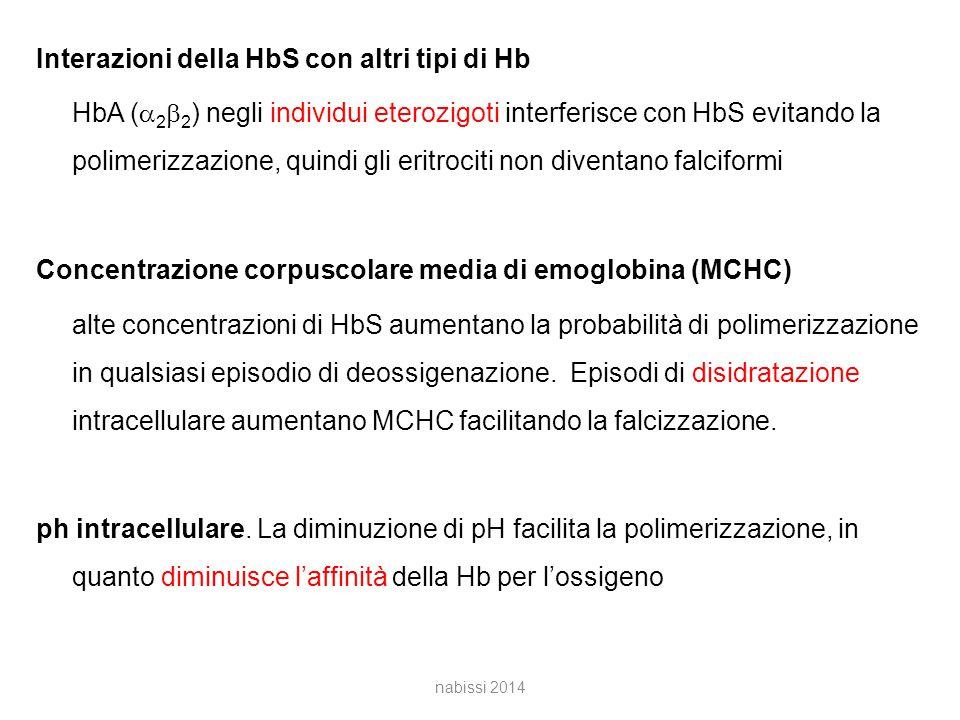 Interazioni della HbS con altri tipi di Hb HbA (a2b2) negli individui eterozigoti interferisce con HbS evitando la polimerizzazione, quindi gli eritrociti non diventano falciformi Concentrazione corpuscolare media di emoglobina (MCHC) alte concentrazioni di HbS aumentano la probabilità di polimerizzazione in qualsiasi episodio di deossigenazione. Episodi di disidratazione intracellulare aumentano MCHC facilitando la falcizzazione. ph intracellulare. La diminuzione di pH facilita la polimerizzazione, in quanto diminuisce l'affinità della Hb per l'ossigeno