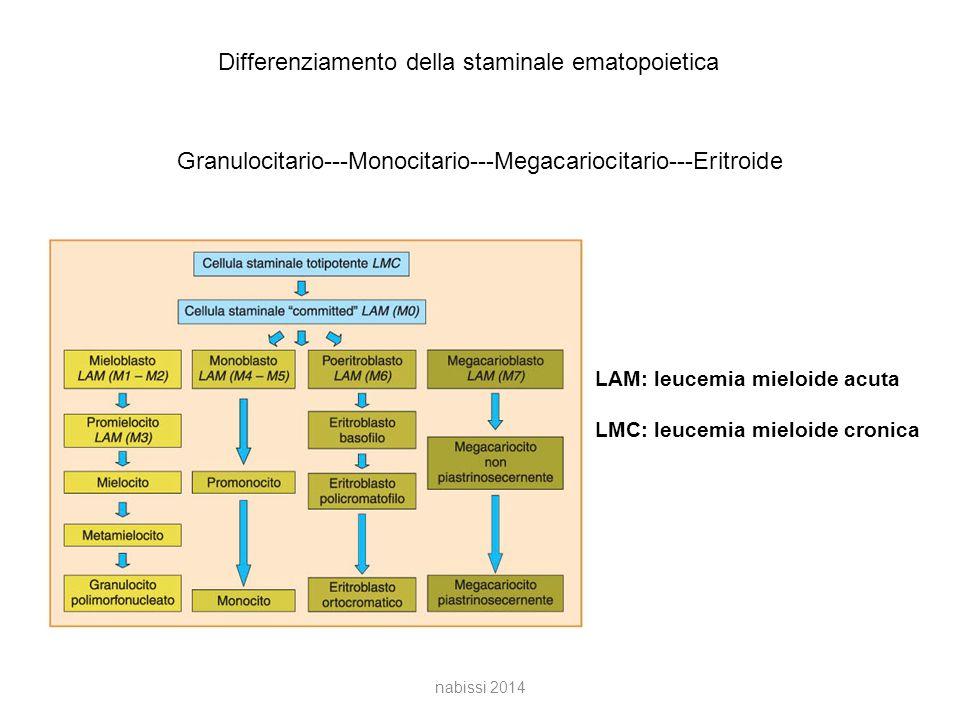 Differenziamento della staminale ematopoietica