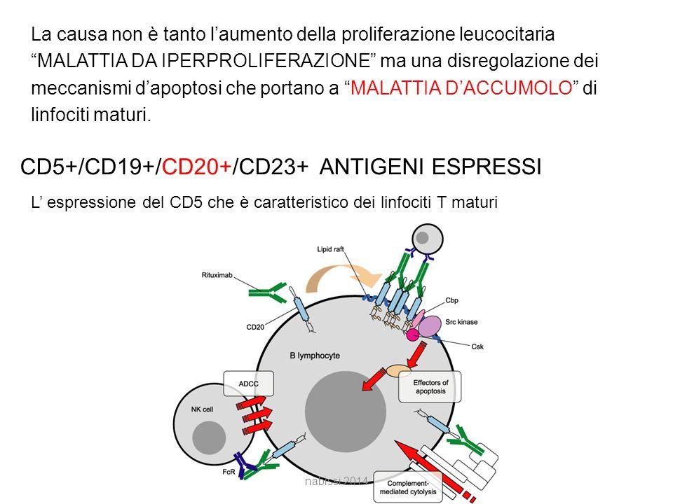 CD5+/CD19+/CD20+/CD23+ ANTIGENI ESPRESSI