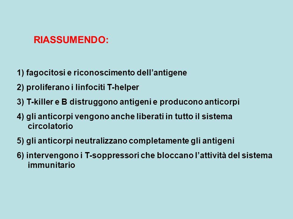 RIASSUMENDO: 1) fagocitosi e riconoscimento dell'antigene