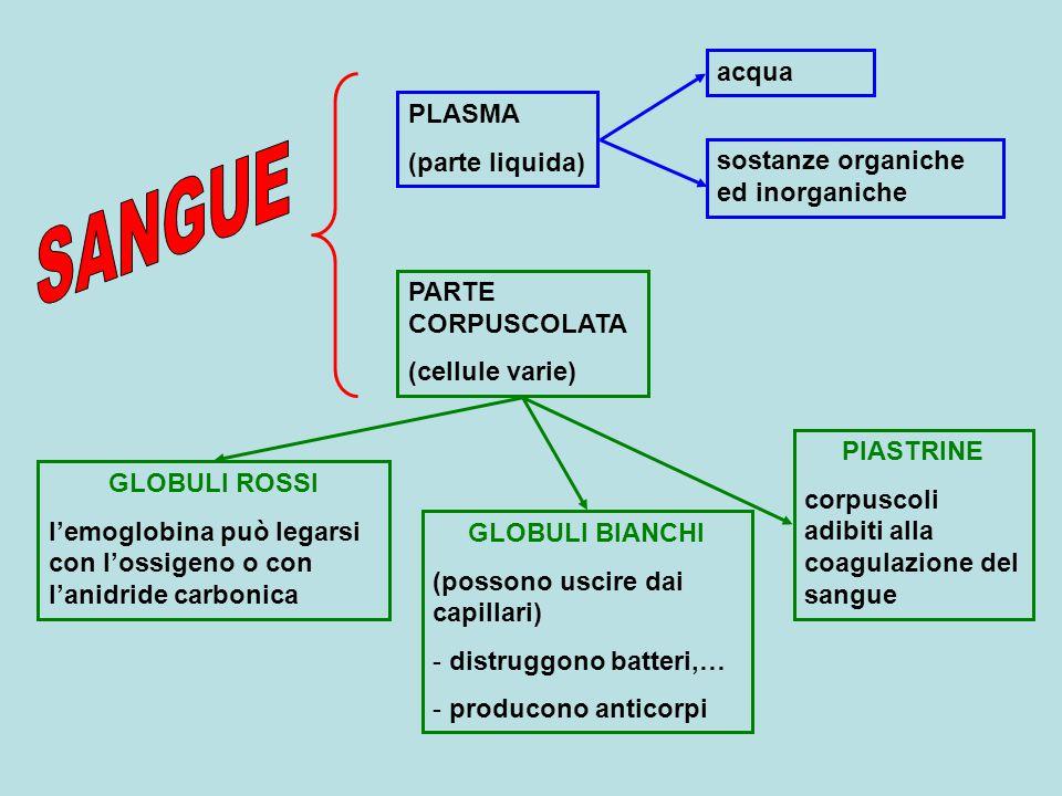 SANGUE acqua PLASMA (parte liquida) sostanze organiche ed inorganiche