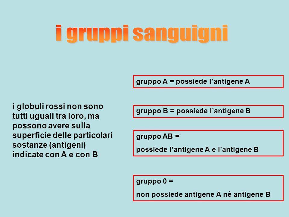 i gruppi sanguigni gruppo A = possiede l'antigene A.