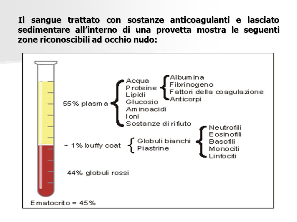Il sangue trattato con sostanze anticoagulanti e lasciato sedimentare all'interno di una provetta mostra le seguenti zone riconoscibili ad occhio nudo: