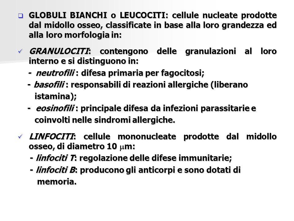 GLOBULI BIANCHI o LEUCOCITI: cellule nucleate prodotte dal midollo osseo, classificate in base alla loro grandezza ed alla loro morfologia in: