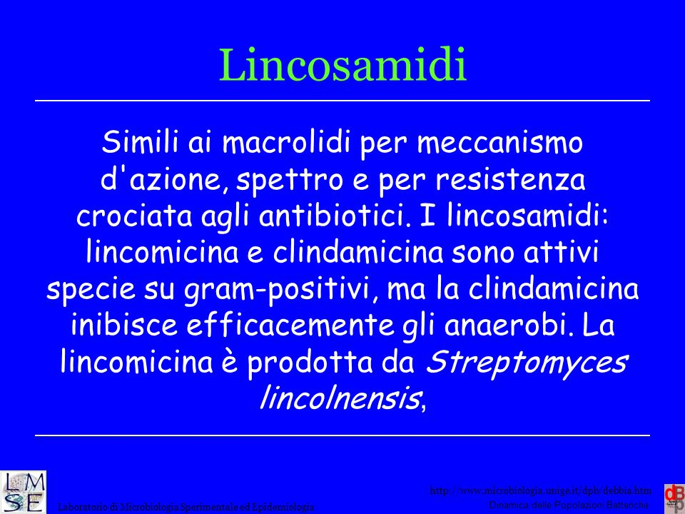 Lincosamidi