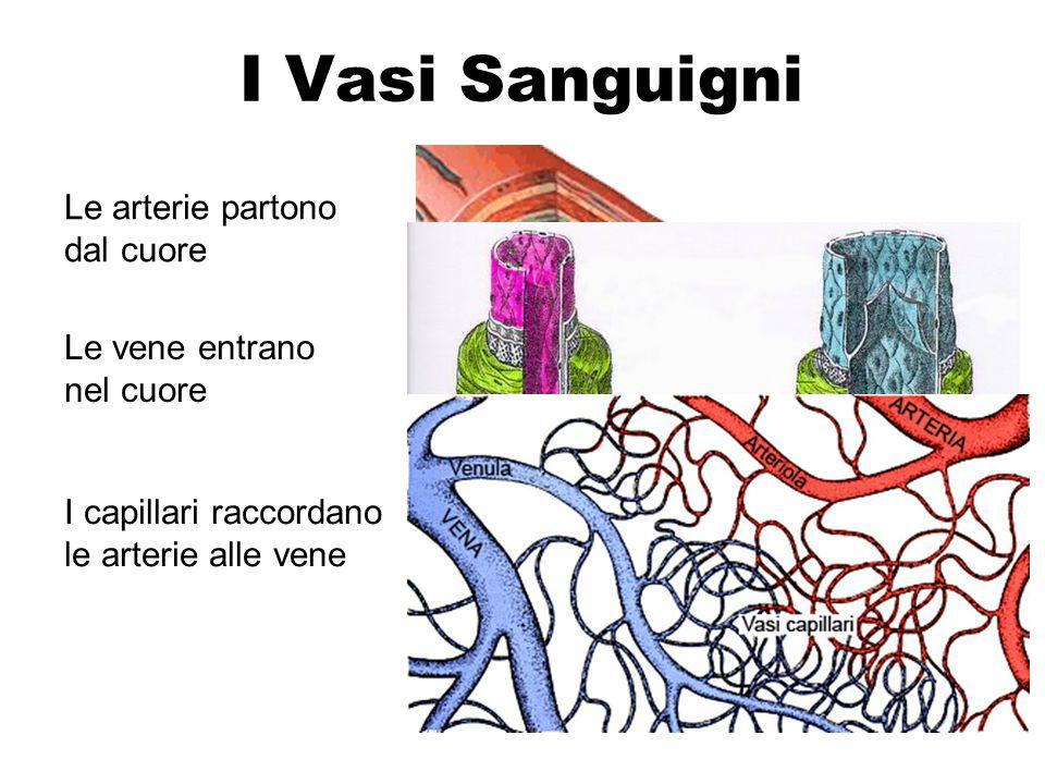 I Vasi Sanguigni Le arterie partono dal cuore Le vene entrano