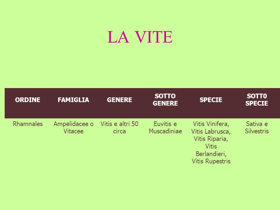 Vitis Vinifera, Vitis Labrusca,