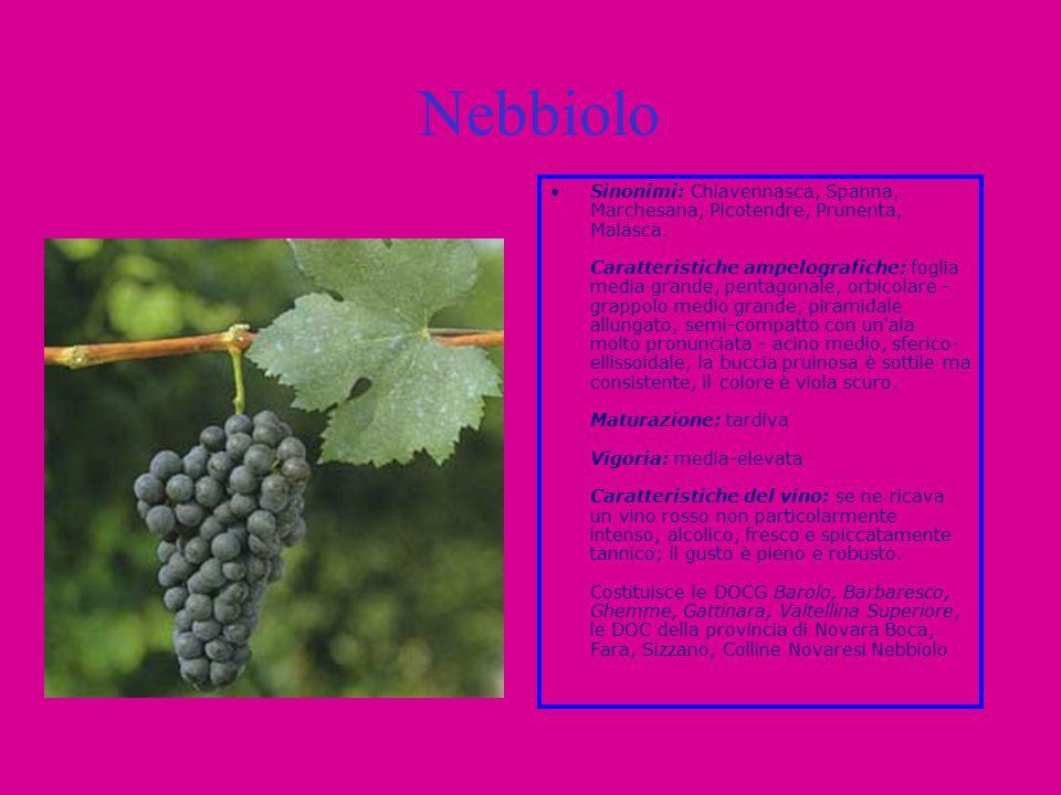 Nebbiolo