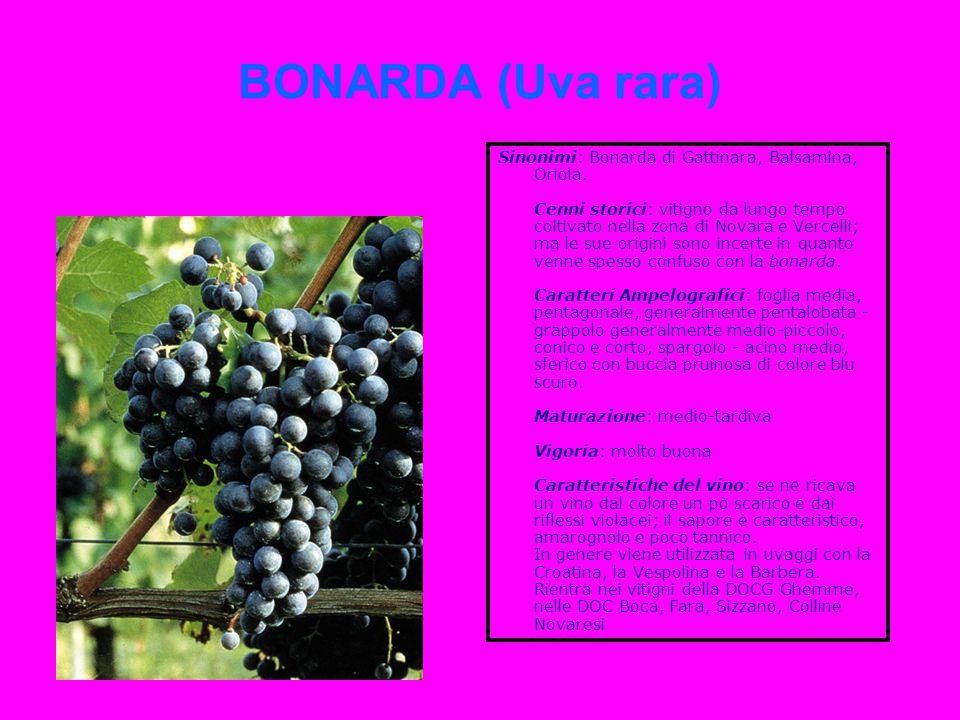 BONARDA (Uva rara)