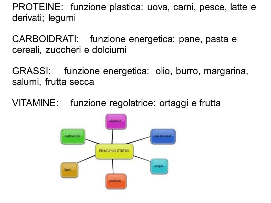 PROTEINE: funzione plastica: uova, carni, pesce, latte e derivati; legumi