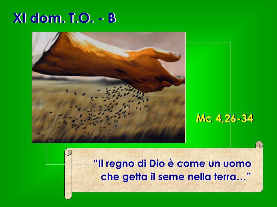 XI dom. T.O. - B Mc 4,26-34 Il regno di Dio è come un uomo