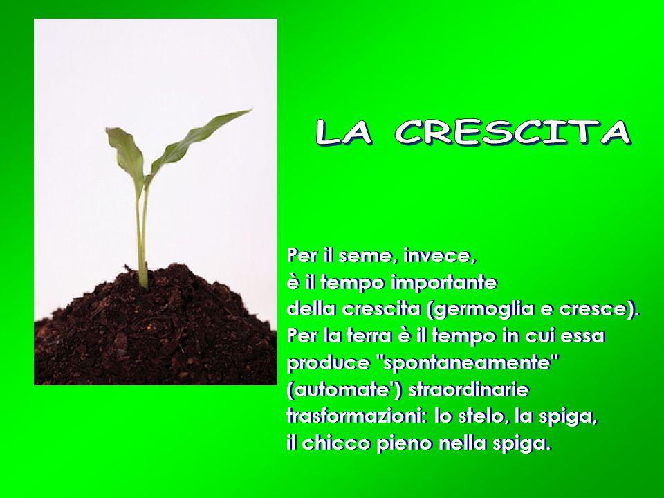 LA CRESCITA Per il seme, invece, è il tempo importante