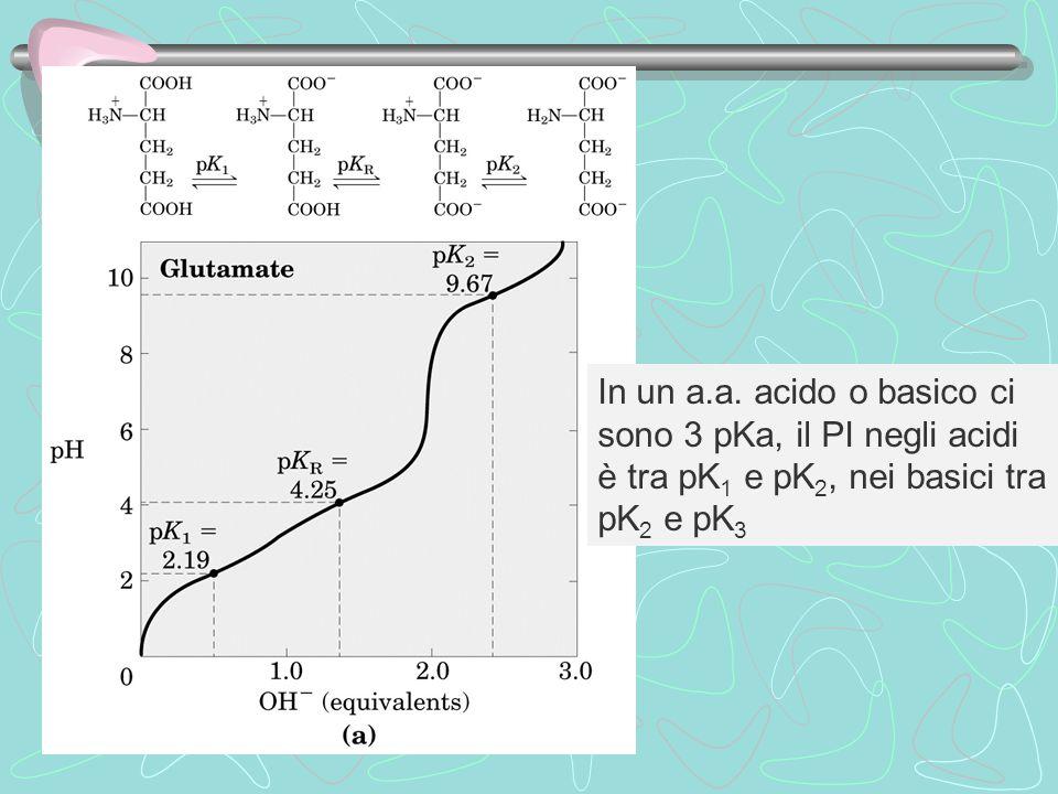 In un a.a. acido o basico ci sono 3 pKa, il PI negli acidi è tra pK1 e pK2, nei basici tra pK2 e pK3