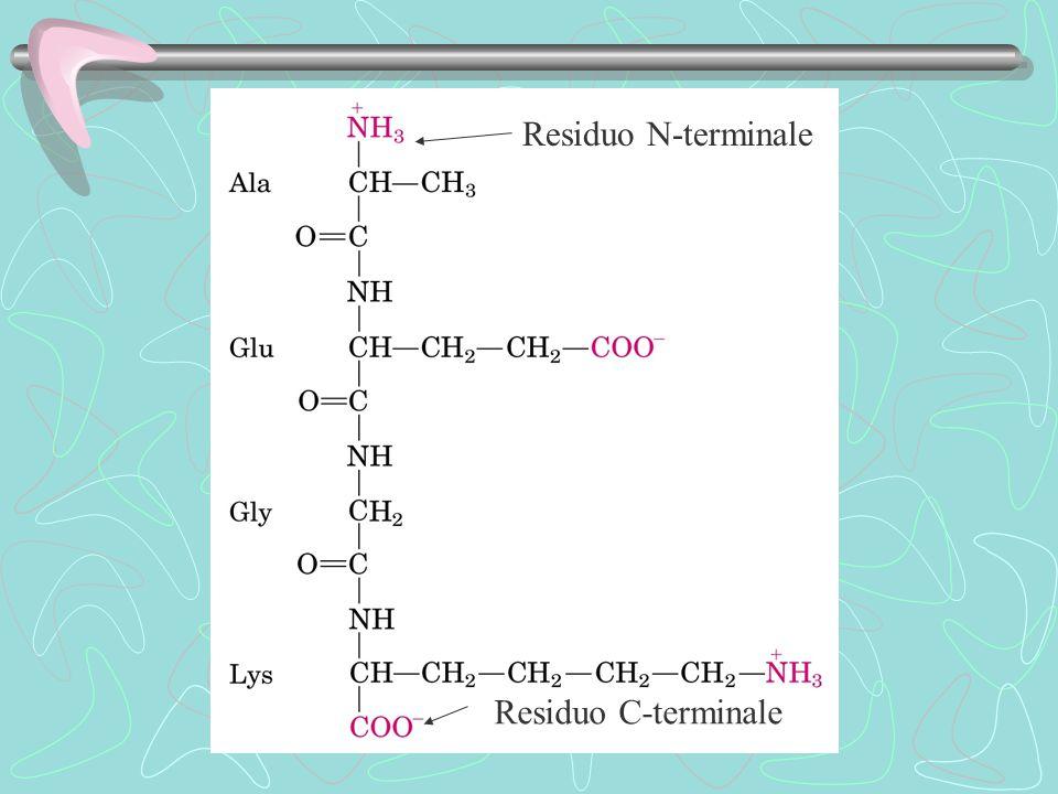 Residuo N-terminale Residuo C-terminale