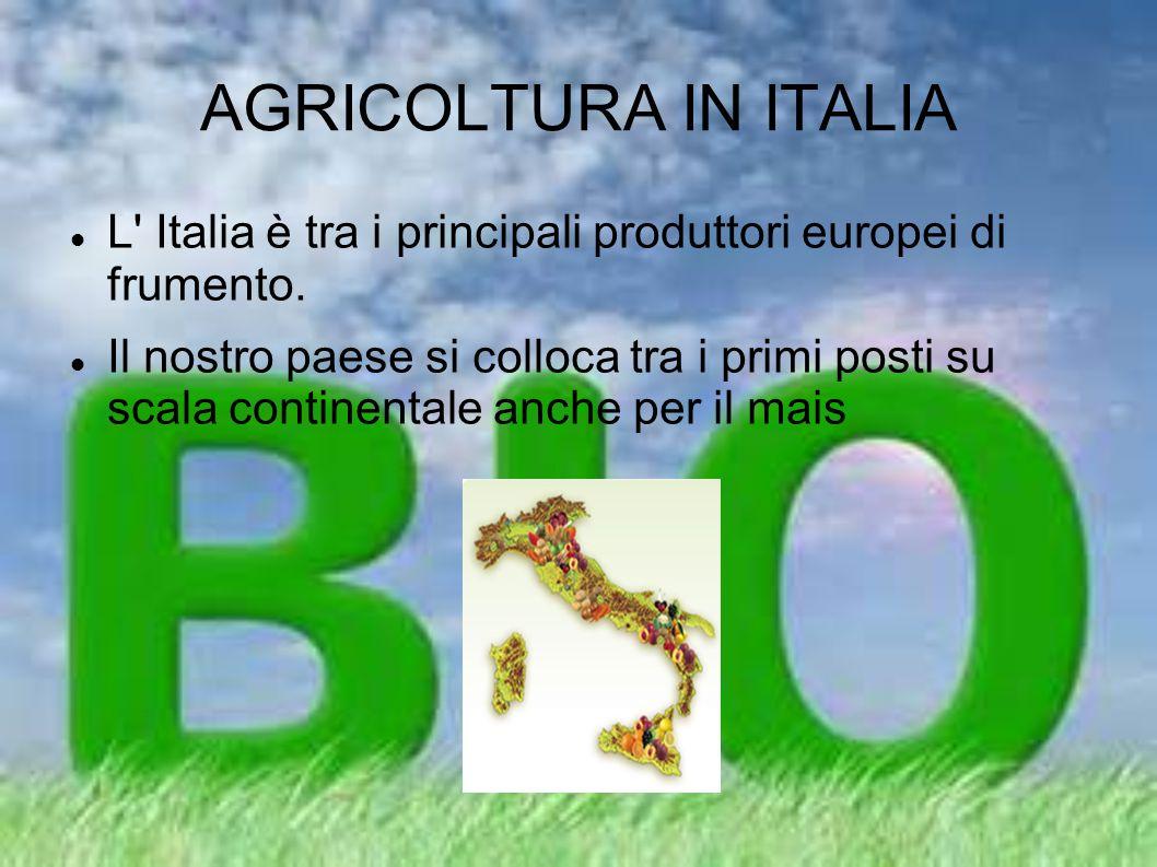 AGRICOLTURA IN ITALIA L Italia è tra i principali produttori europei di frumento.