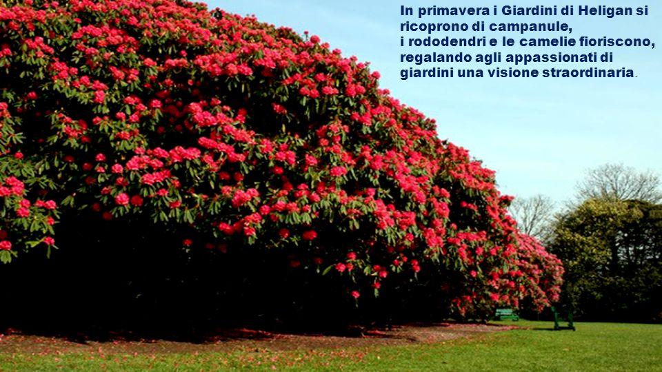 In primavera i Giardini di Heligan si ricoprono di campanule,