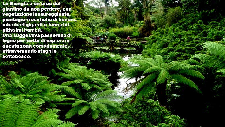 La Giungla è un area del giardino da non perdere, con vegetazione lussureggiante, piantagioni esotiche di banani, rabarbari giganti e tunnel di altissimi bambù.