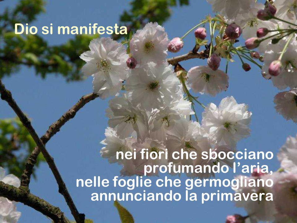 Dio si manifesta nei fiori che sbocciano profumando l'aria, nelle foglie che germogliano annunciando la primavera.