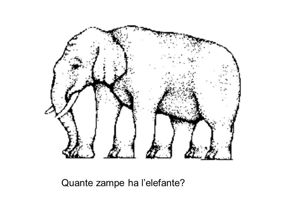 Quante zampe ha l'elefante