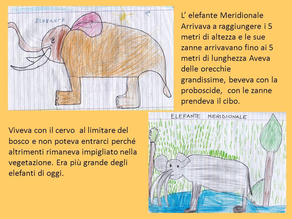 L' elefante Meridionale