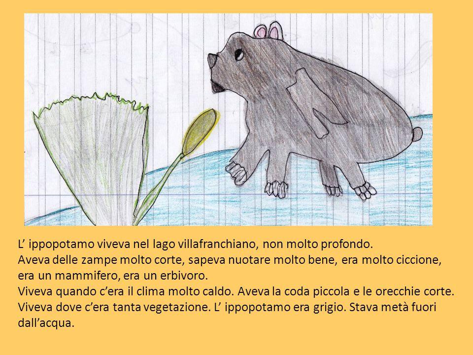L' ippopotamo viveva nel lago villafranchiano, non molto profondo.