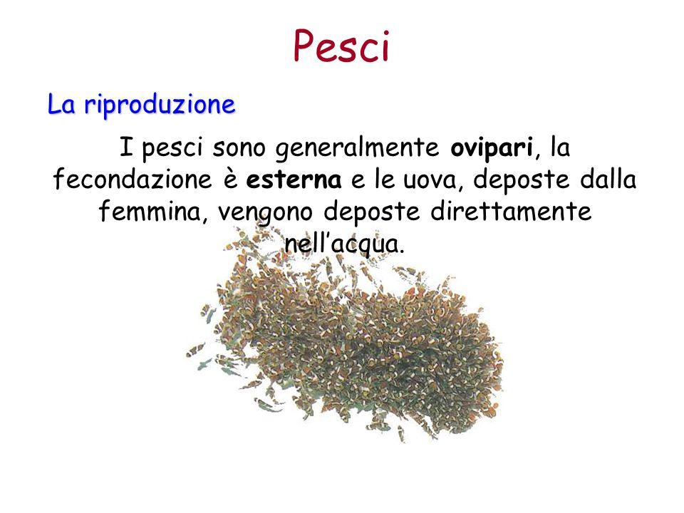 Pesci La riproduzione.