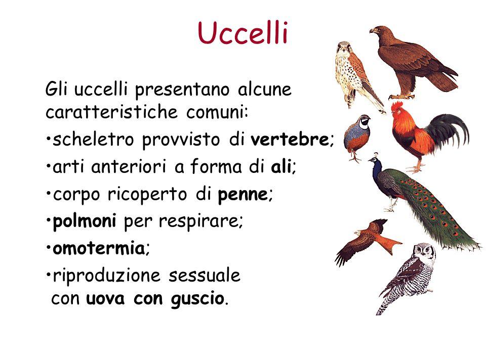 Uccelli Gli uccelli presentano alcune caratteristiche comuni: