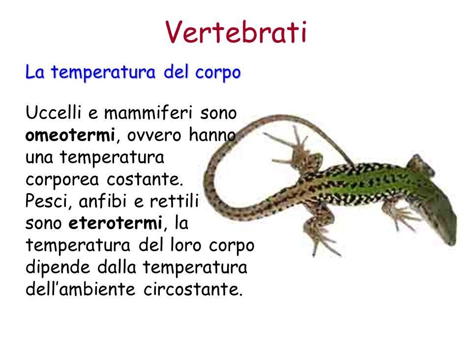 Vertebrati La temperatura del corpo