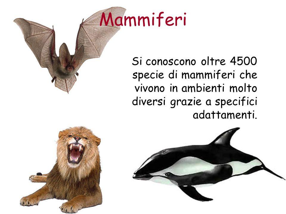 Mammiferi Si conoscono oltre 4500 specie di mammiferi che vivono in ambienti molto diversi grazie a specifici adattamenti.